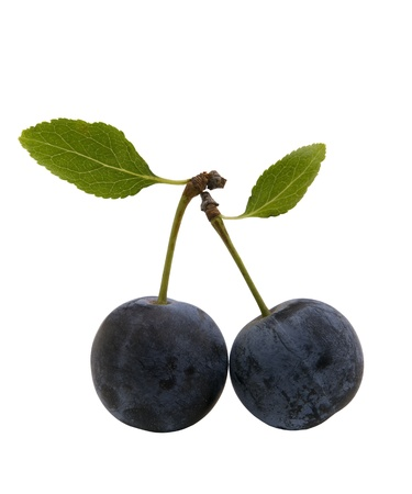 purple leaf plum: two berries of sloes with leaves, isolated on white