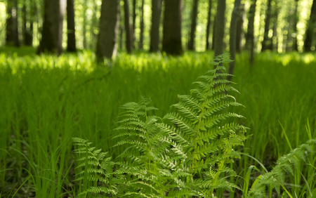 branch of a fern sways in the wind in the spring forest on sunny day