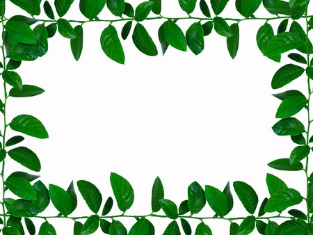 leaves frame                      photo