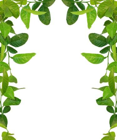 telaio di foglie verdi - immagini simili disponibili
