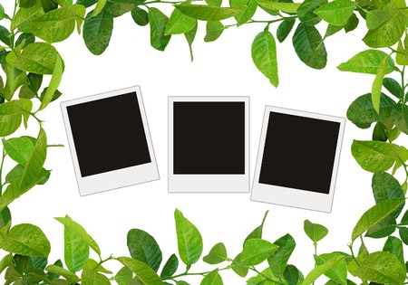 free space: green leaves frame and tree blank photos