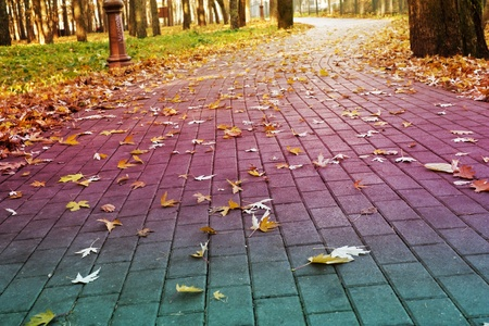 Stock Photo: brick road in the park covered with yellow fallen leaves photo