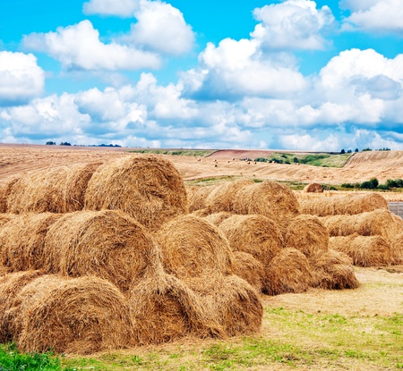 rick: landscape view of a farm field with gathered crops - stacks of wheat