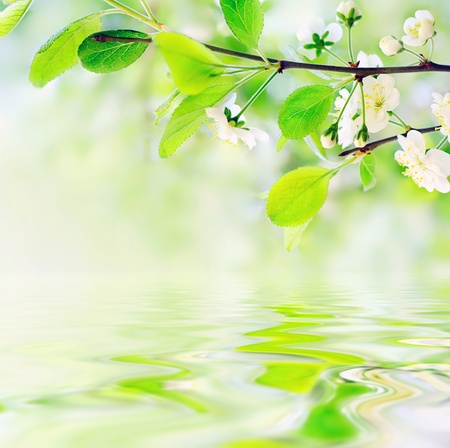 white spring flowers on a tree branch over green bokeh background on water waves - shallow DOF