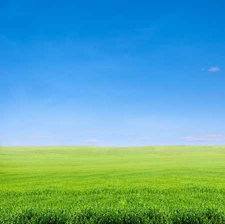field of green grass over blue sky - rural landscape