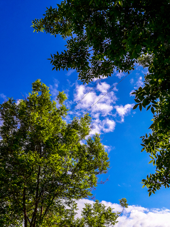 Branches of a tree with green leaves against a blue sky with white clouds. tree a blue sky