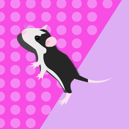 Pet Rat. cute Rat. cute Pet. Decorative rat. Domestic rat.  イラスト・ベクター素材