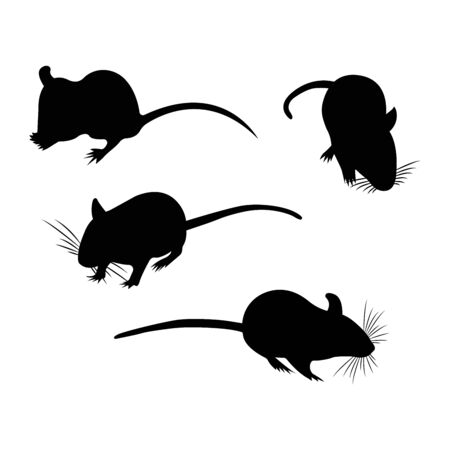 Silhouette. Pet Rat. cute Rat. cute Pet. Decorative rat. Domestic rat.