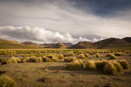 high desert: Mountains of Bolivia, altiplano, desert and green landscapes, trees and rocks, sand and water, sky and earth. Beautiful views of South America. Stock Photo