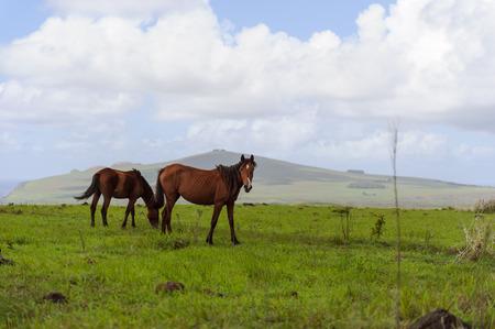 South America Easter Island Horses. Mountains photo
