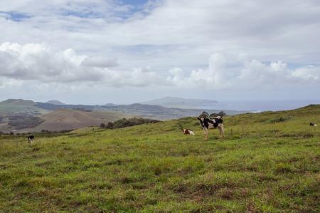 moai: moai Sur Isla de Pascua Latina. Caballos Monta�as. Estatuas. Oc�ano.