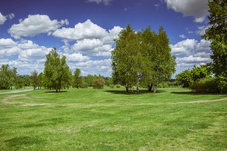 birchwood: Birches on the grass. Birchwood