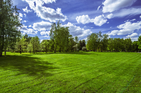 non cultivated land: Green grass field