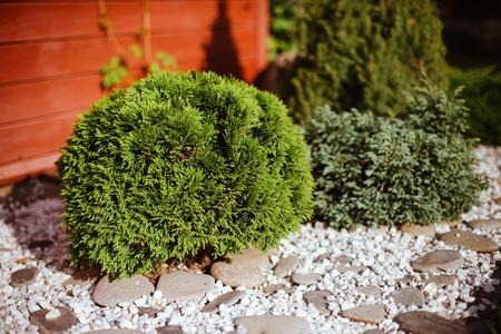 grassy plot: lawn in the garden Stock Photo