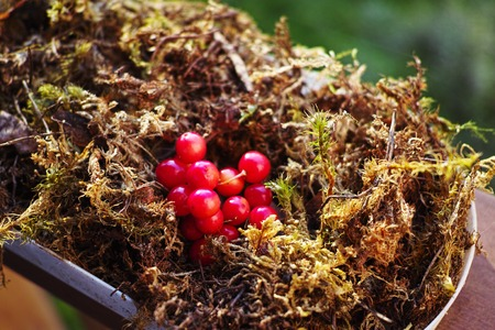 chock: Wedding decor of moss and wild berries on the stand Stock Photo