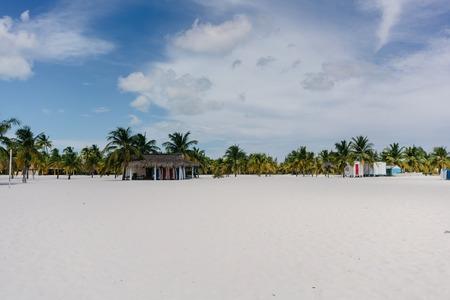 varadero: Palm trees on the shore of the Caribbean Sea on the white sand beach of Cayo Largo, Cuba