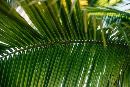 varadero: Palm leaf close-up in the resort town of Varadero, Cuba Stock Photo