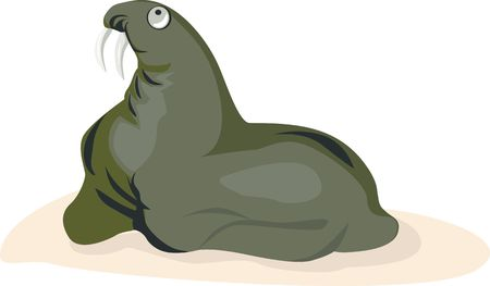 Illustration of a sea lion looking for something  illustration