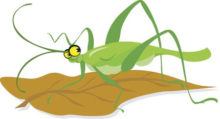 Illustration of a grasshopper with long antenna sitting in a leaf   illustration