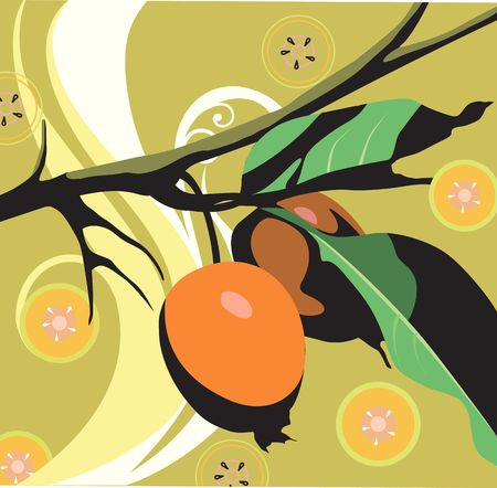 Illustration of guavas and slices of fruits  illustration