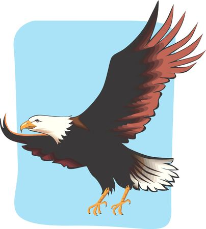 eagle flying: Illustration of an eagle with wings open