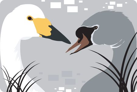 mate: Illustration of a white and grey swans