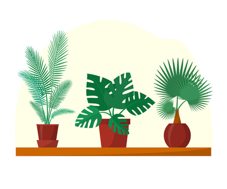 Tropical plants and palms set in flat style, home plants in pots on shelf, vector illustration