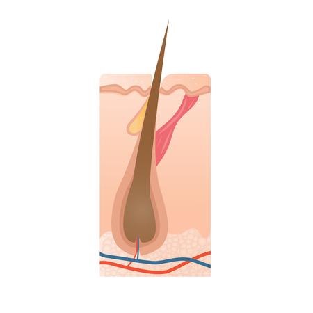 Healthy hair bulb, hair growth icon, medical vector illustration