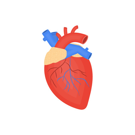 Human organ flat icon, human heart, anatomy, arteries and veins, medicine vector illustration
