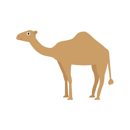 Camel icon in flat style, african animal vector illustration 일러스트