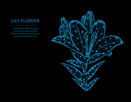 Lily flower low poly design, blossom in polygonal style, plant vector illustration on black background
