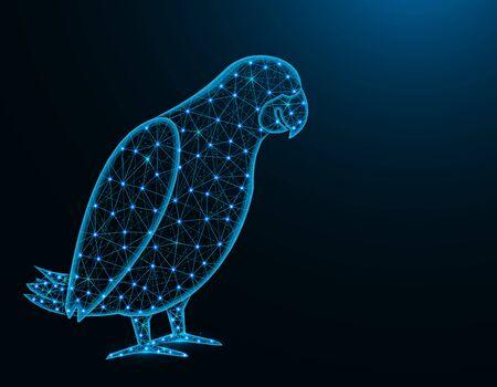 Jaco parrot low poly model, African animal abstract graphics, bird polygonal wireframe vector illustration on dark blue background