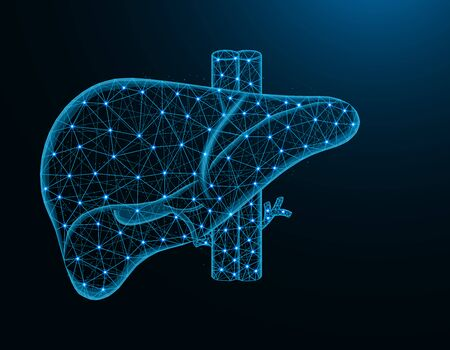 Liver with artery and veins low poly model, human organs abstract graphics, anatomy polygonal wireframe vector illustration on dark blue background Иллюстрация