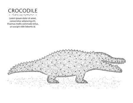 Crocodile low poly design, African animal polygonal wireframe vector illustration made from points and lines on a white background
