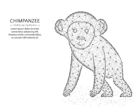 A monkey low poly design, African animal abstract graphics, primate polygonal wireframe vector illustration made from points and lines on a white background Иллюстрация