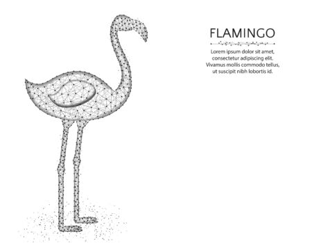 Flamingo low poly design, African animal abstract graphics, bird polygonal wireframe vector illustration made from points and lines on a white background