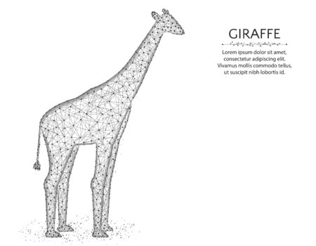 Giraffe low poly design, African animal abstract graphics, mammal polygonal wireframe vector illustration made from points and lines on a white background
