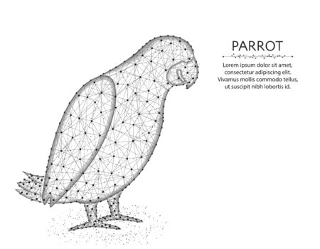 Jaco parrot low poly design, African animal abstract graphics, bird polygonal wireframe vector illustration made from points and lines on a white background Иллюстрация