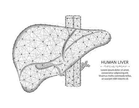 Liver with artery and veins low poly design, human organs abstract graphics, anatomy polygonal wireframe vector illustration made from points and lines on a white background