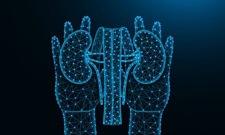 Hands and kidneys low poly design, human organ in polygonal style, human urinary system wireframe vector illustration made from points and lines on dark blue background