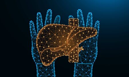 Hands and liver low poly design, human organ in polygonal style, exocrine gland wireframe vector illustration made from points and lines on dark blue background