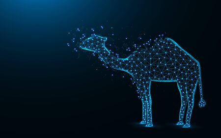 Camel low poly design, African animal abstract geometric image, zoo wireframe mesh polygonal vector illustration made from points and lines on dark blue background Reklamní fotografie - 129395397