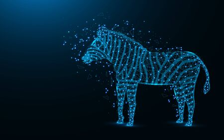 Zebra low poly design, African animal abstract geometric image, zoo wireframe mesh polygonal vector illustration made from points and lines on dark blue background