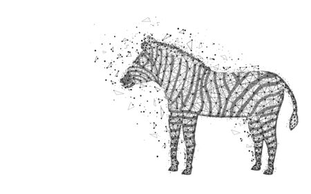 Zebra low poly design, African animal abstract geometric image, zoo wireframe mesh polygonal vector illustration made from points and lines on white background Ilustrace