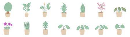Vector illustration of indoor plants in a pot. Houseplants isolated on white background.