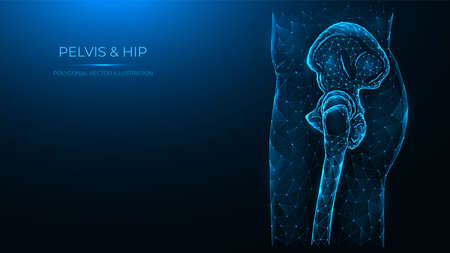 Polygonal vector illustration of the human pelvis and hip joint side view. Human thigh made of dots and lines isolated on dark blue background.
