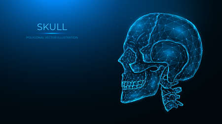 Polygonal vector illustration of a human skull, side view. Anatomical model of the skull and cervical spine on dark blue background.