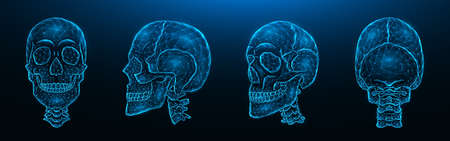 Polygonal vector illustration of human skulls, front, side, and back views. Set of low poly models of skulls with cervical spine isolated on dark blue background. Head bone anatomy concept art.
