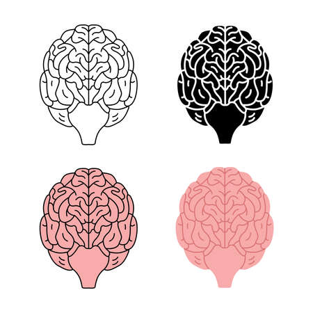 Healthy human brain front view vector illustration isolated on white background