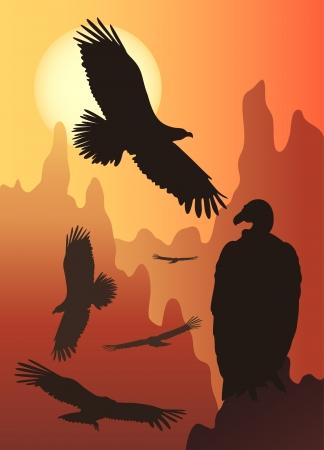 wild birds in the wild nature Illustration
